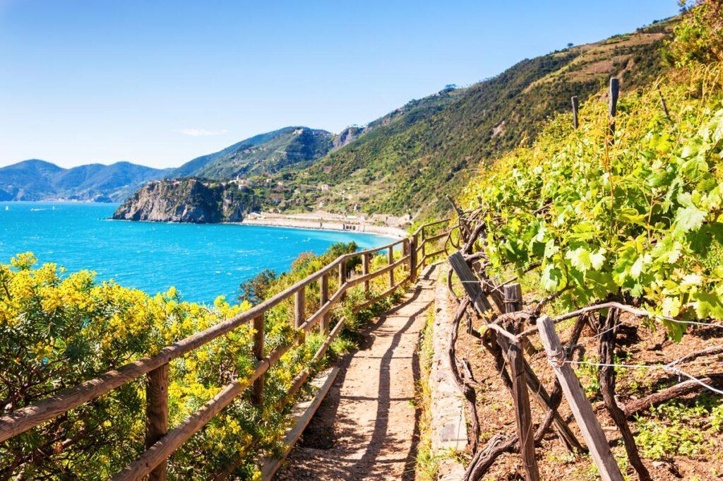 Vinogradi Italije